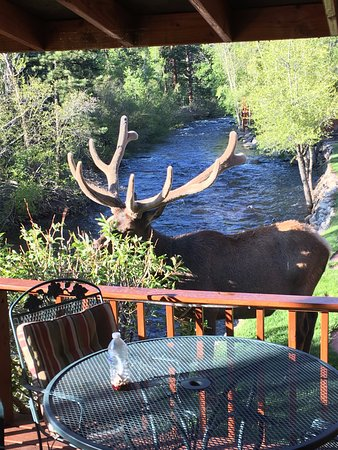 Paradise on the River: Elk in front of our cabin