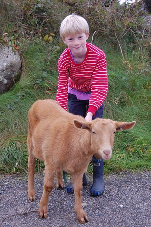 Carnmenellis, UK: Sammy the boy and Sammy the Goat
