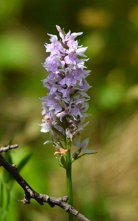 Ramsgate, UK: Orchid