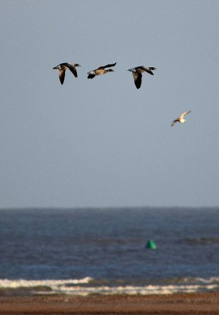 Ramsgate, UK: Birds on the Wing