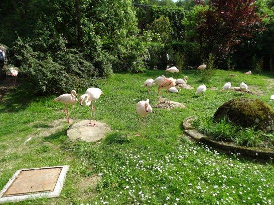 Krakow Zoo (Ogrod Zoologiczny): krakow zoo - flamingos