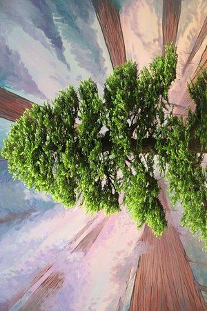 Redwood Bonsai Tree Pacific Bonsai Museum Federal Way Wa