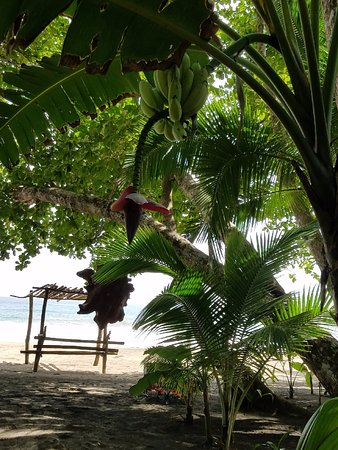 Congo Bongo Ecolodges Costa Rica: Grab a banana on the way to the beach!