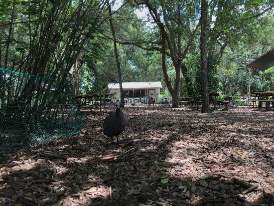 Lady Lake, FL: Uncle Donald's Farm