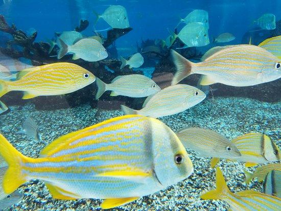 Ray Picture Of St Augustine Aquarium St Augustine