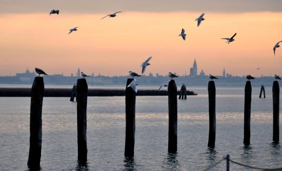 Hotel Le Isole: Bacino di San Marco, 2 minuti a piedi dall'hotel