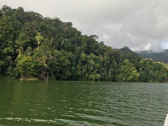 Belum Rainforest Resort: Los alrededores del hotel