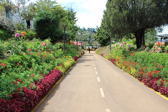 Ooty - Elk Hill, A Sterling Holidays Resort: Driveway from the resort to the gate and road.