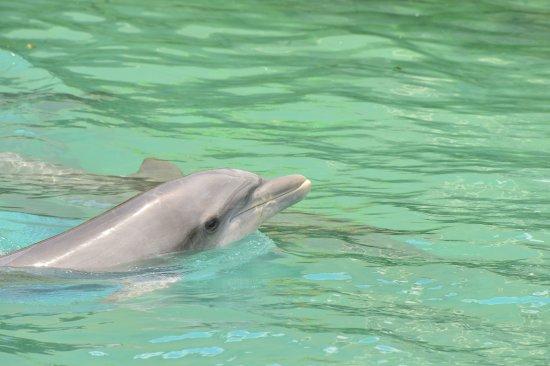Dolphin Quest: qute?