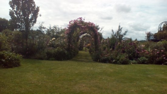 Attleborough, UK: Peter Beales rose gardens