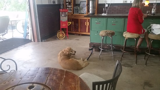Spicewood, TX: Buddy enjoying the dog friendly environment