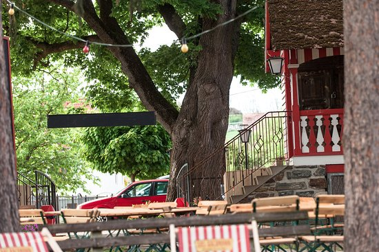 Plank am Kamp, Ausztria: Im Gastgarten stehen wunderbare alte Bäume.