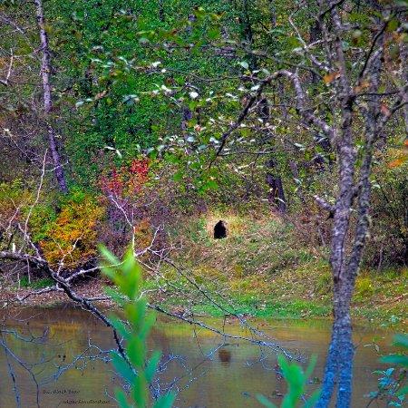 Pemberton, Canadá: Black Bear