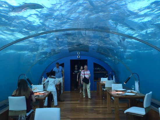 Ithaa Underwater Restaurant Picture Of Conrad Maldives
