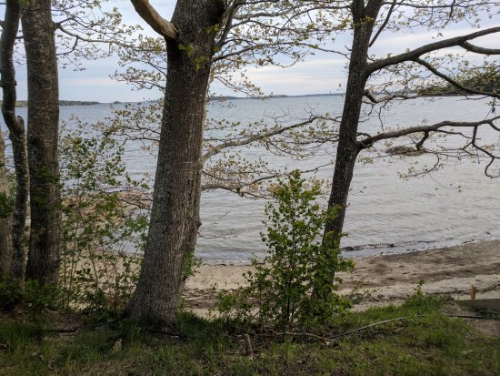 Recompence Shore Campground at Wolfe's Neck Farm: View from camp site