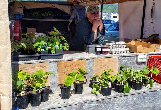 Homer, AK: Bob's fresh eggs, blueberry jam, and assorted plants