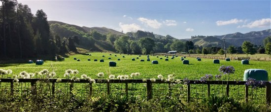 Mangaweka, Nueva Zelanda: Freshly made baleage in the paddock