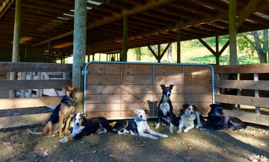 Mangaweka, New Zealand: The farm dogs enjoying a break. We couldn't farm without them