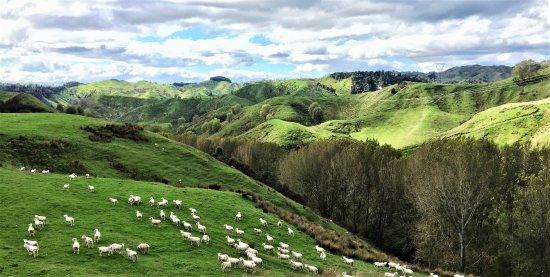 Mangaweka, New Zealand: Beautiful view for a sheep muster