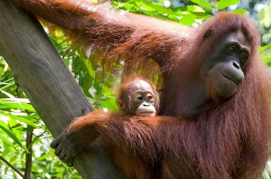 Private Bali Zoo Day Tour and Swim at