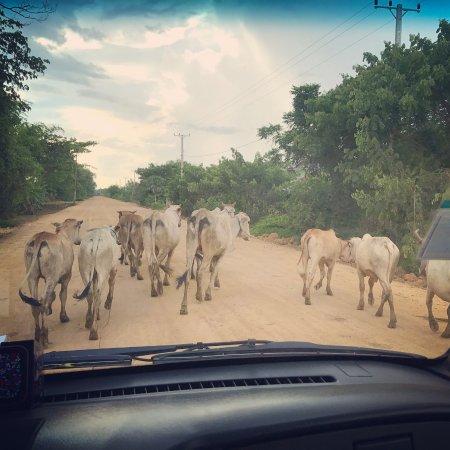 Battambang Resort: Battambang traffic