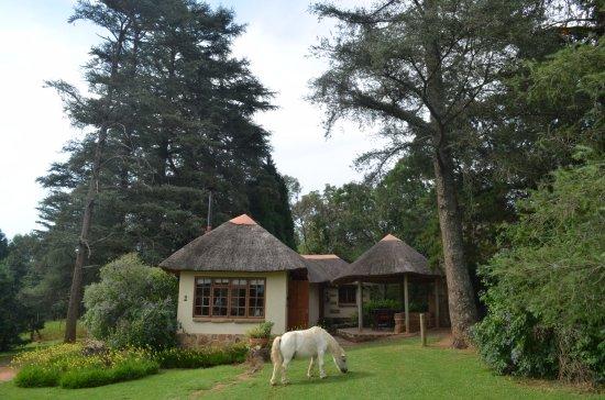 Bergville, South Africa: Thunzi Cottage & Braai Area