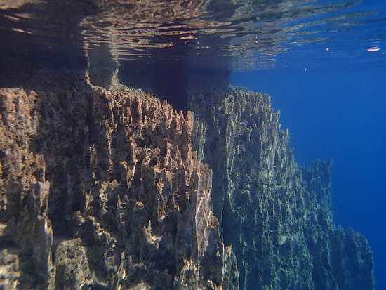 Barracuda Lake: 水中はこんな感じ