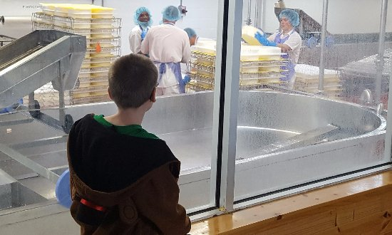 Roth Kase Cheese Factory: Forming huge cheese wheels in what look like giant ice trays
