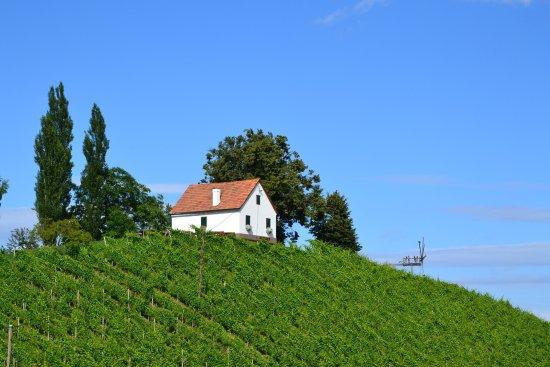 Gamlitz, Österrike: Der Schererkogl