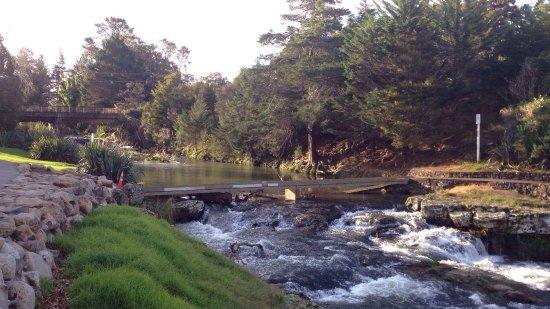 Whangarei Falls: Beautiful waterfall