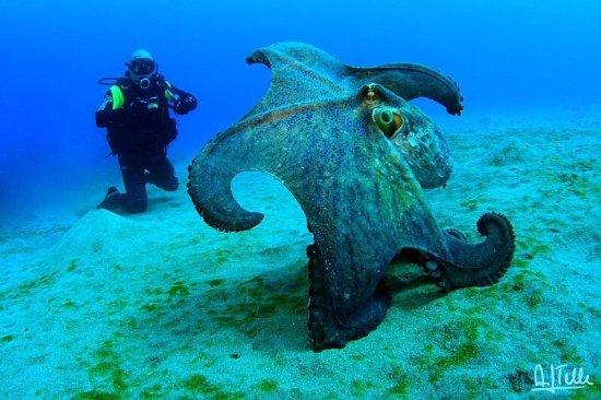 Rubicon Diving: Dive Center Marina Rubicon