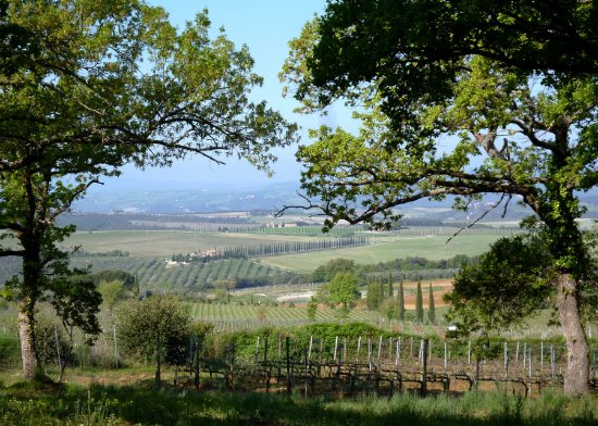 Montalcino, Italy: View from Máté Winery