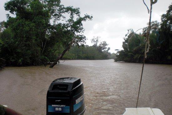 Tabin Wildlife Reserve: y mas lluvia torrencial por popa