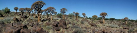 Keetmanshoop, Namibië: Köcherbaumwald
