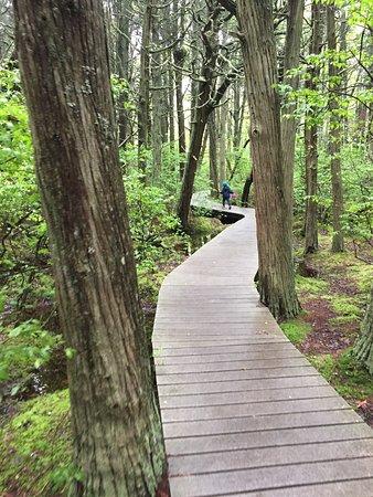 White Cedar Swamp: photo0.jpg