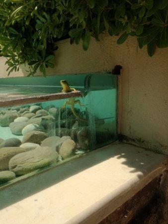 Minoa Palace Resort: Experience wild life in Minoa ;)