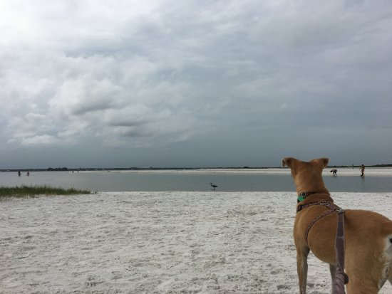 Honeymoon Island State Park Return To Dog Beach 2017