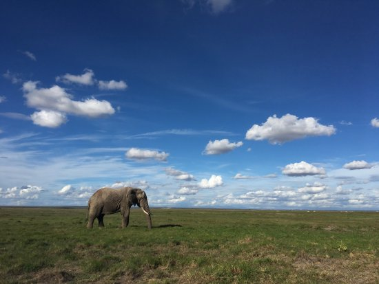 Amboseli National Park, Kenia: photo0.jpg