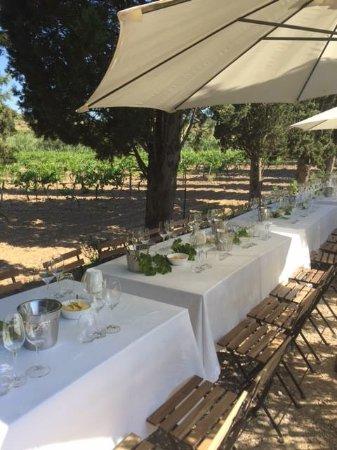 Subirats, España: catas /tastings junto a los viñedos de nuestra finca Molí Coloma