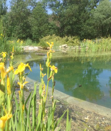 Le Mas de La Baou : Ecological swimming pool