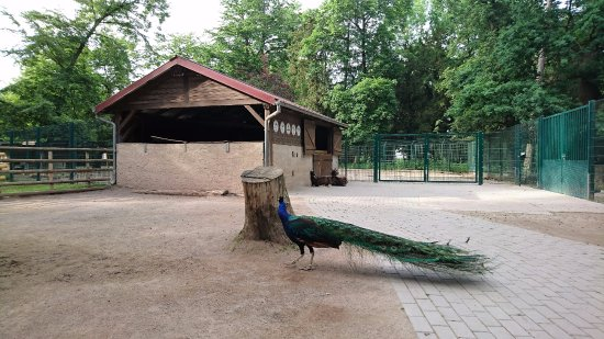 Illkirch-Graffenstaden, France: Parc animalier Friedel - Animaux & installations