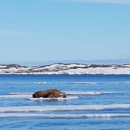 Isfjord Radio: IMG_20170603_171732_779_large.jpg