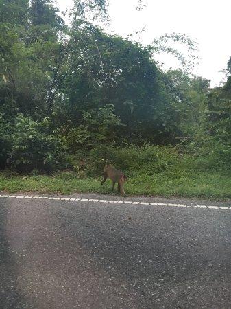 Khao Yai National Park: ลิงเข้าป่า