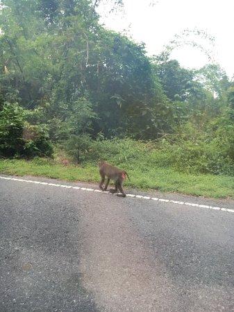 Khao Yai National Park: ลิงตูดแดง
