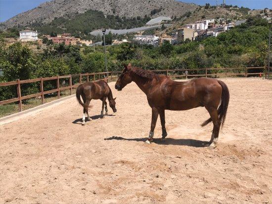 Rancho La Ofra: photo0.jpg
