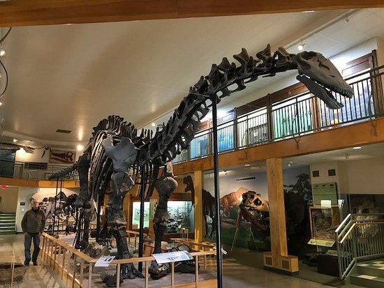 University of Wyoming Geological Museum: Dino