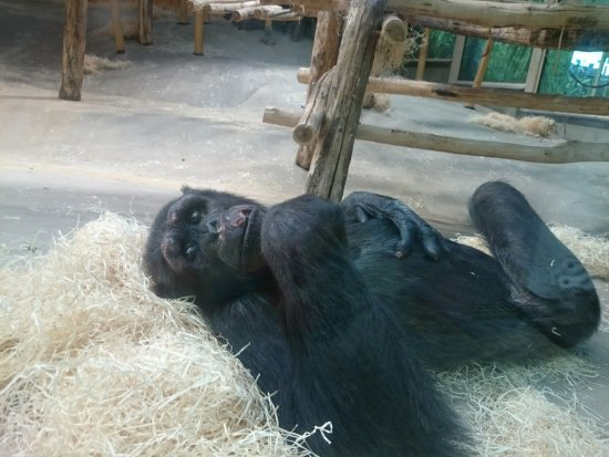 Antwerp Zoo (Dierentuin): Im Zoo selbst