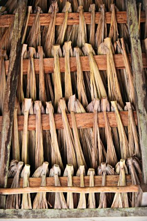 Rupununi, Guyana: Thatched Roof of Cabins