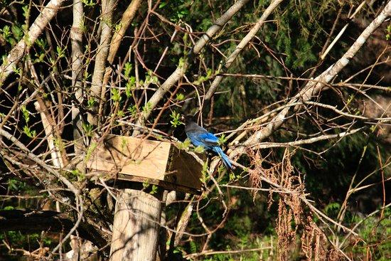 Allens Alaska Adventures : Bird watching from the cabin
