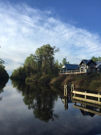 Dismal Swamp State Park Photo